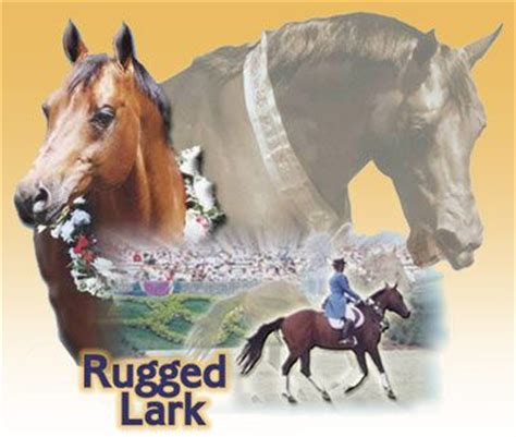 rugged lark 17 best images about rugged lark on models dressage and my boys