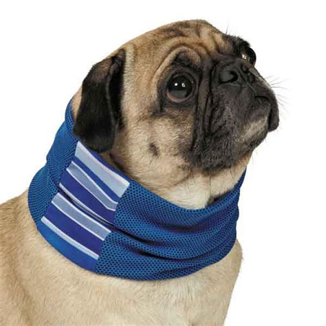 biting puppy neck cool pup with insect shield neck gaiter blue with same day shipping baxterboo