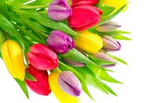 colored flowers bouquet of multi colored tulips wallpapers and images