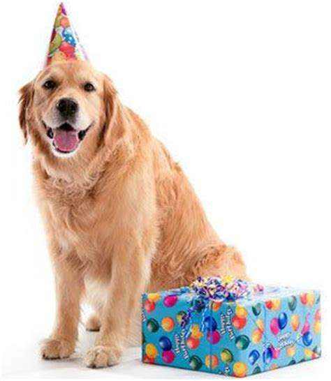 dogs birthday our favorite gifts for dogs the dogington post