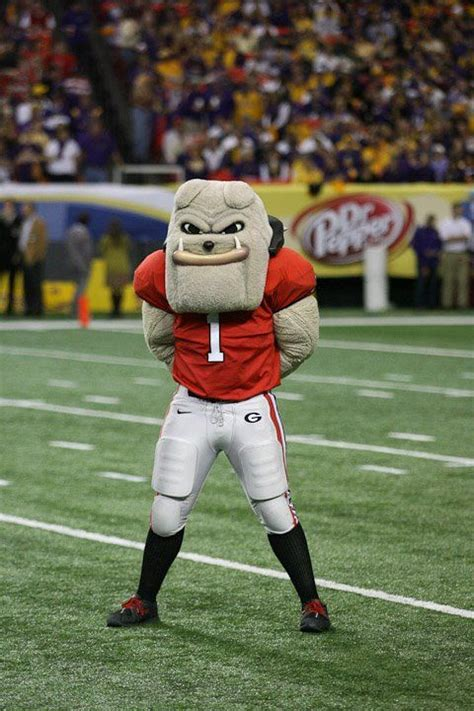 Dawg Uga Mascot Pictures