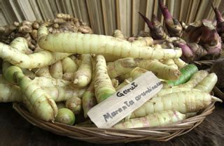 produk produk olahan  tanaman garut maranta