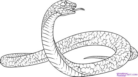 drawing the color line how to draw a black mamba step by step snakes animals