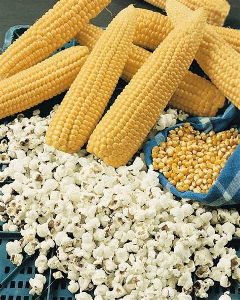 popcorn seeds for sale vegetable garden seeds