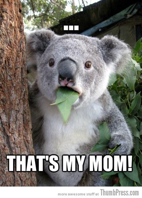 Koala Bear Meme - funny koala memes