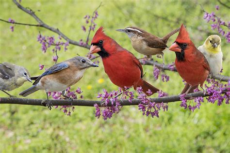 how to attract birds to your yard hint don t just wing it