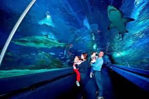 Fish Tank Bed Istanbul Sea Life Aquarium Turkey Top Tips Before You