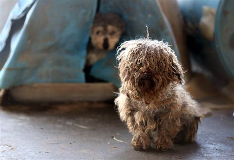 puppy mill dogs 183 animals rescued from puppy mill in arkansas