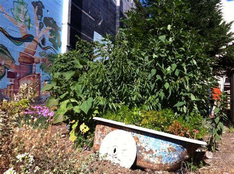 bathtub flower bed bathtub flower bed sf ca organic gardening pinterest