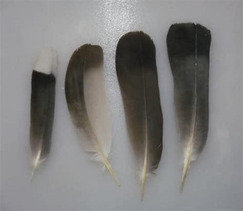 feather identification help me identify a bird