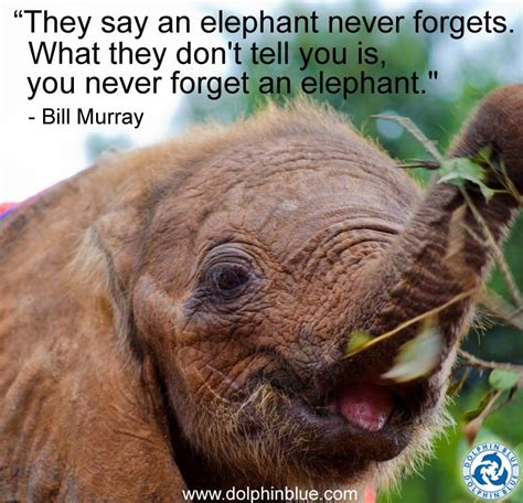 Quotes About Elephants