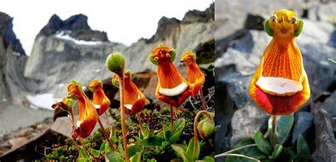 nomi di fiori rari piante e fiori capo verde climi piante e paesaggi dellu