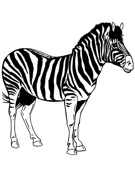 printable coloring pages zebra zebra print coloring pages az coloring pages