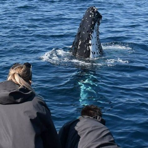 fast boat sydney whale watching cruise sydney fast boat ride 2 hours