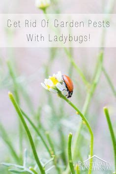 getting rid of garden pests 1000 images about gardens on cottage gardens