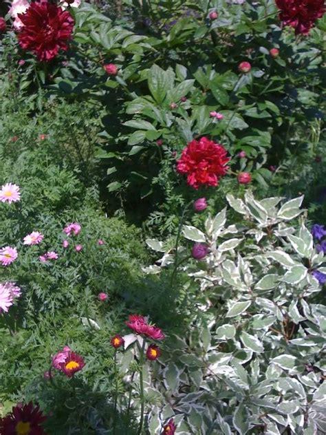 un quadrato di giardino forum un quadrato di giardino forum di giardinaggio un