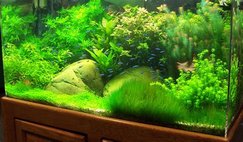 aquascaping guide aquascaping guide 20 images understanding