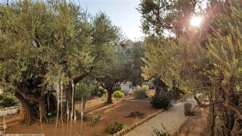 der garten gethsemane gethsemane hier betete jesus vor seiner kreuzigung