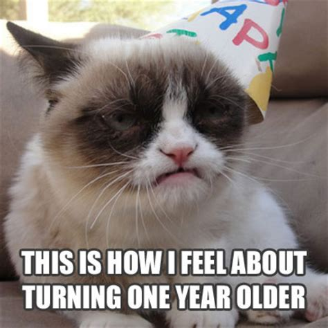 Cat Meme Birthday - grumpy cat birthday memes yes memes