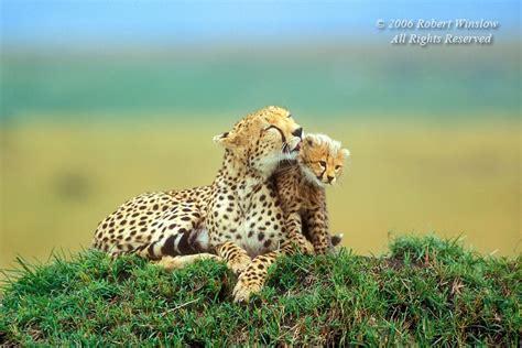 imagenes muy bonitas de animales sfw fotos bonitas de animales mediavida