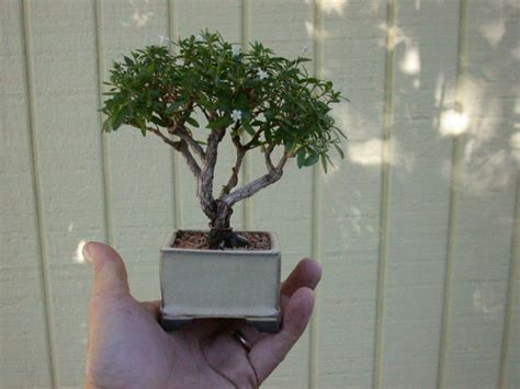 tiny trees httplometscom