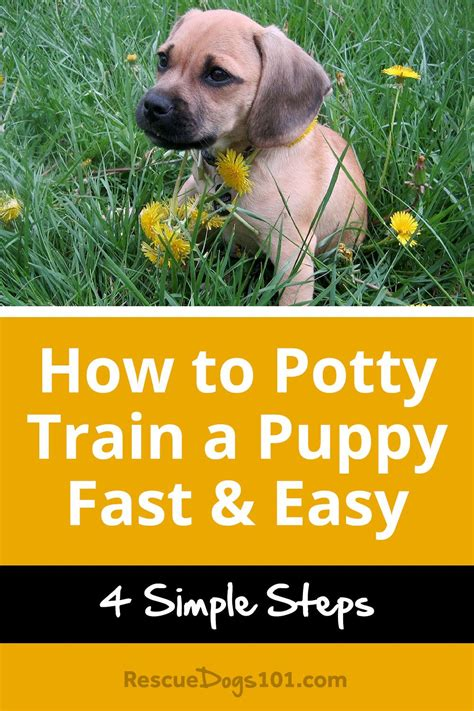easiest dogs to house train how to house train a puppy house plan 2017