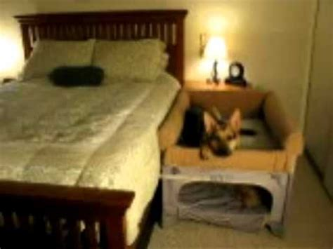 co sleeper for bed co sleeper pet bunk bed youtube