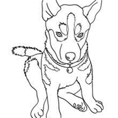 maltese coloring pages coloring pages dog coloring pages bestofcoloring com