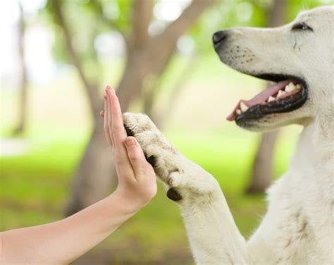 5 Ways To Let Your Animal Instincts Kick In by 5 Lessons We Can Learn From Animals List Goodnet
