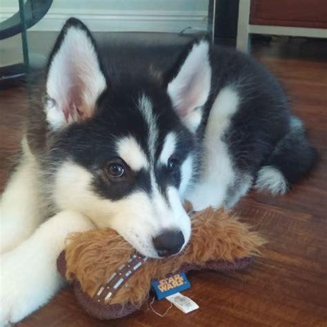 puppy necessities archives reactor