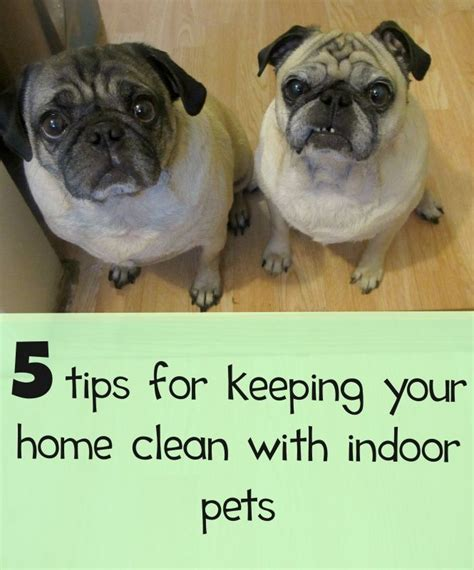 5 tips for maintaining a clean house with indoor pets
