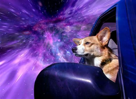 Dogs In Space photographer makes dogs look like they are traveling
