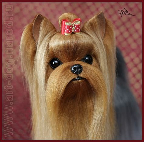 yorkie names and meanings pin by robbin hoffman vanhook on friends for gucci slick my yorkie