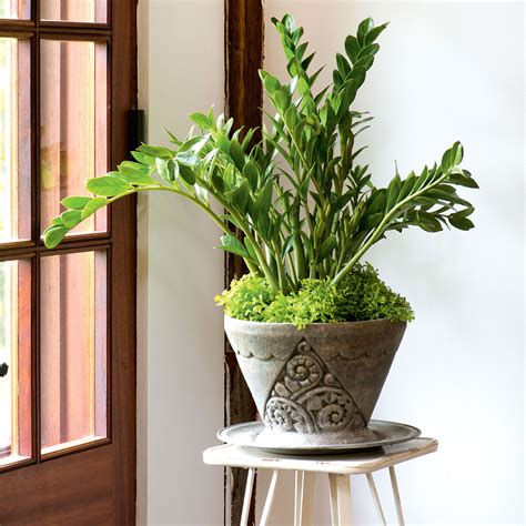 home plant 4 durable indoor plants for your home canadian living