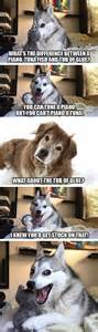 Bad Dog Meme - sorry doge we are all about bad pun dog now