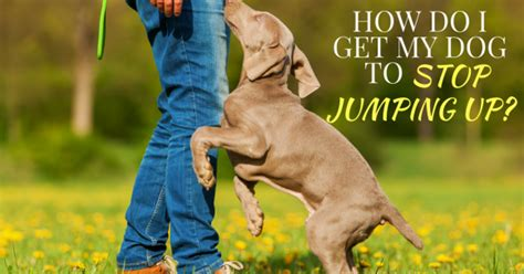 how do i my to stop jumping thedogtrainingsecret