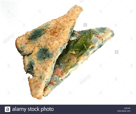 the cheese is old and moldy where is the bathroom old rotten moldy brown bread sandwich with cheese lettuce tomato stock photo