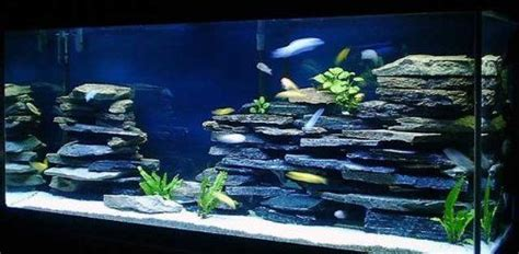 cichlid aquascape amazon com 100 natural organic aquarium cave rock wall