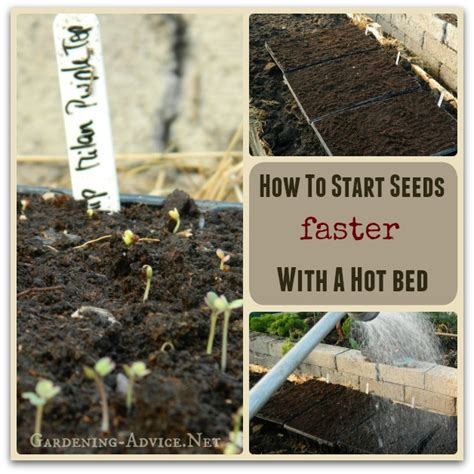 how to start a garden bed growing from seed faster with the help of a hot bed