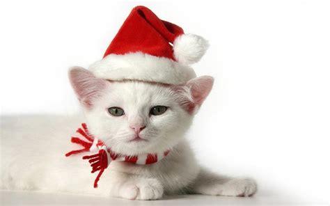 wallpaper cat christmas christmas kitten wallpapers wallpaper cave