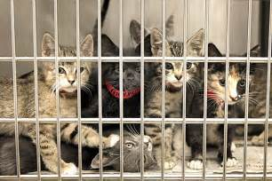 animal rescue home 7 ways to help your local animal shelter