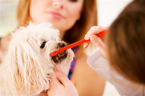 can you use human toothpaste on dogs cat sitting archives walkers more at coddle creek llc