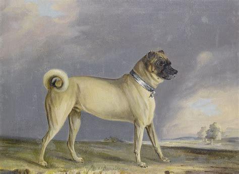 original pug breed file henry bernard chalon a pug 1802 jpg wikimedia commons