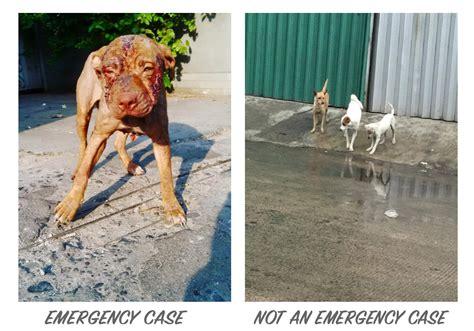 reporting animal cruelty jakarta animal aid network
