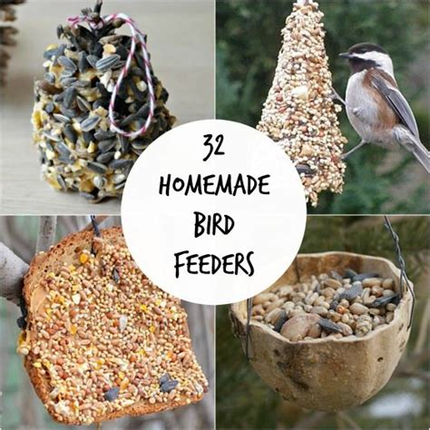 best 25 feeding birds ideas on pinterest feeding birds