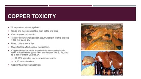 Copper Detox Liver by Small Ruminant Nutrition And The Problems That Arise From