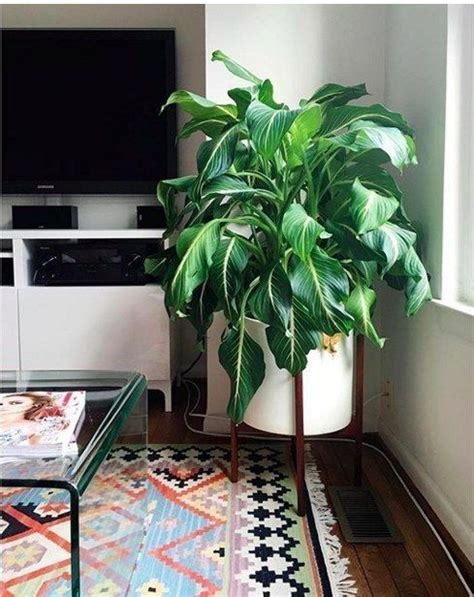 indoor plants for dark rooms 25 best ideas about low light plants on pinterest