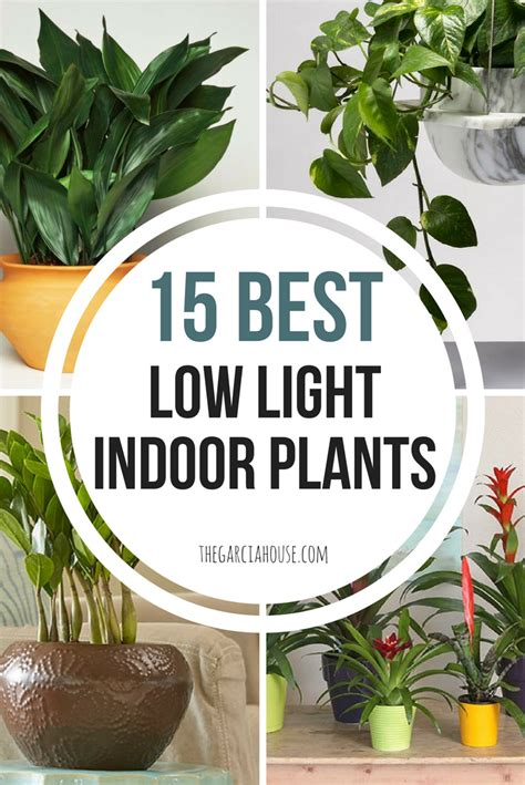 plants that survive with no light 15 best low light indoor plants