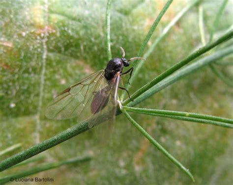 sognare insetti volanti formiche alate tavolo consolle allungabile