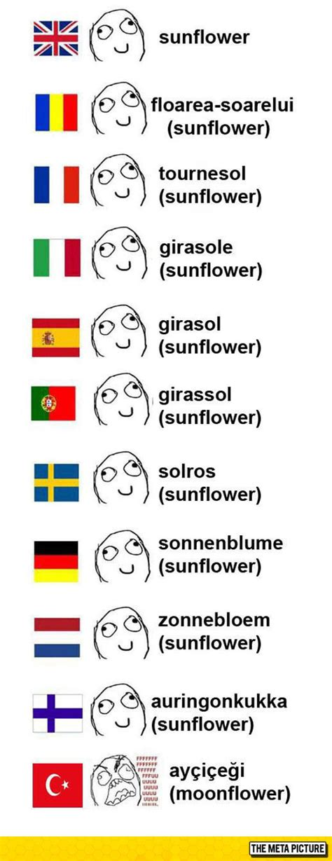 Different Languages Meme - sunflower in different languages the meta picture
